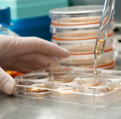Research in medical education stem cells