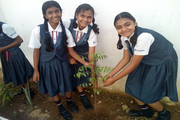 sri chaitanya techno school-activity