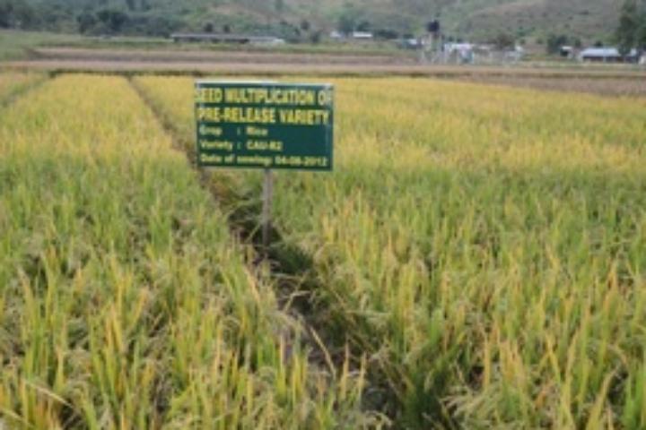Central Agricultural University, Imphal  Central-Agricultural-University-Imphal1