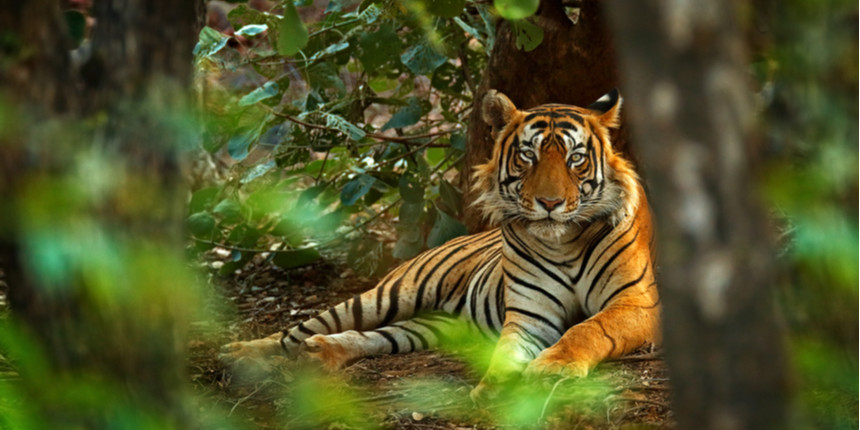 Indian scientists identify family tree of tigers from shed hair