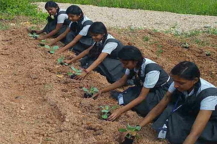 Toch Residential Public School-Tree planting