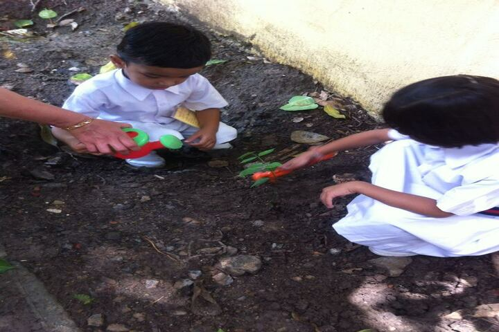 Asashas Sarafa Vidya Niketan Higher Secondary School-Tree Plantataion Activity