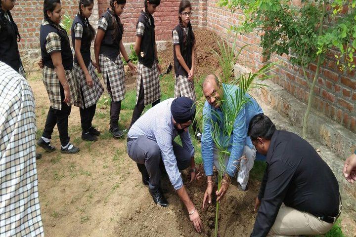Little Flower International School-Tree Plantation