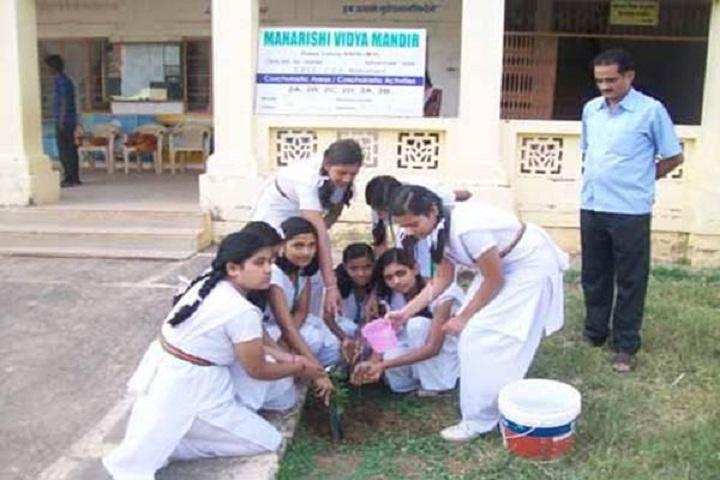 Maharishi Vidya Mandir-Others plantation