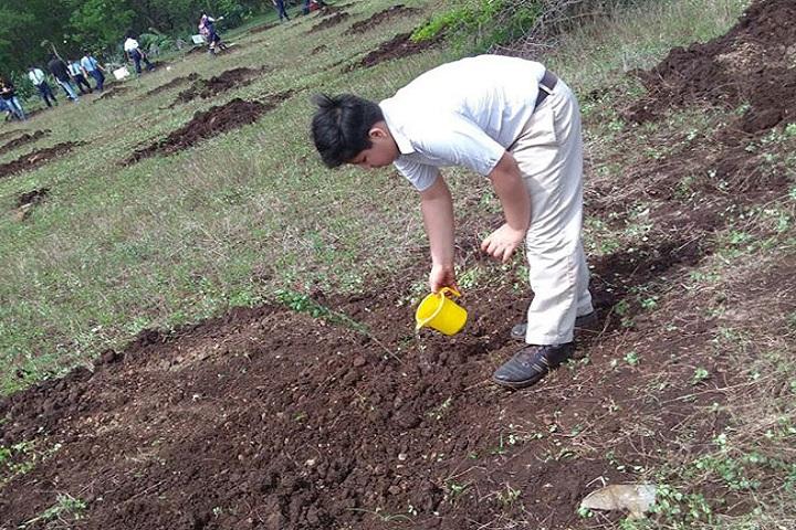 City International School-Tree Plantation