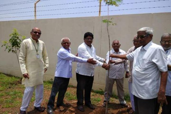 Maharishi Vidya Mandir-Tree Plant