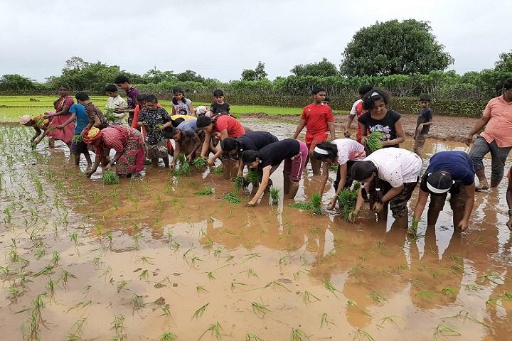 Navnirman High English Medium School-Rice plantations