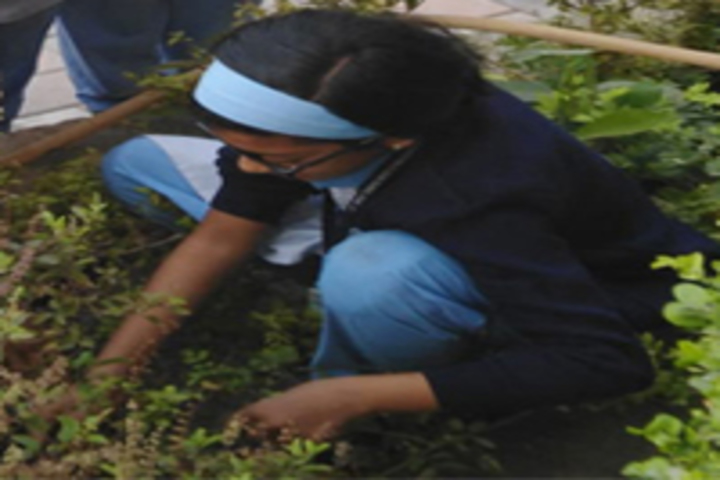 Pandurang International English School-Tree Plantation