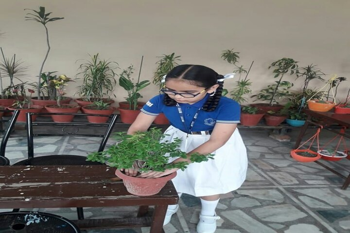 Bhupindra Global School-Plantation
