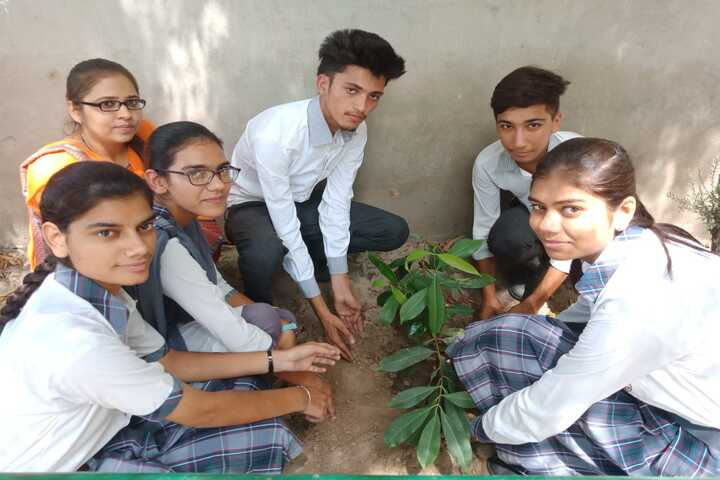 City Heart School-Tree Plant