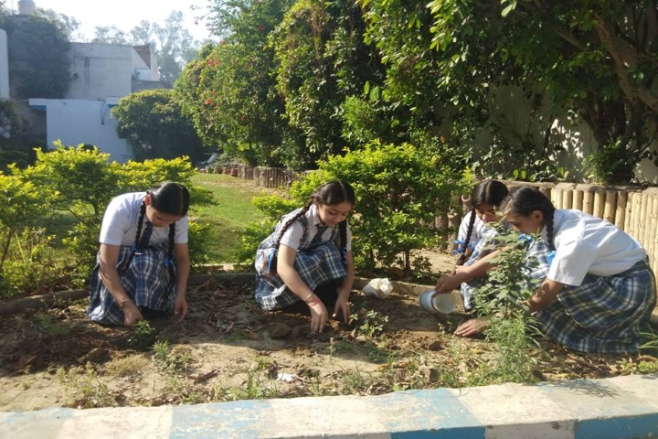 Tagores International Smart School-Tree Plantation
