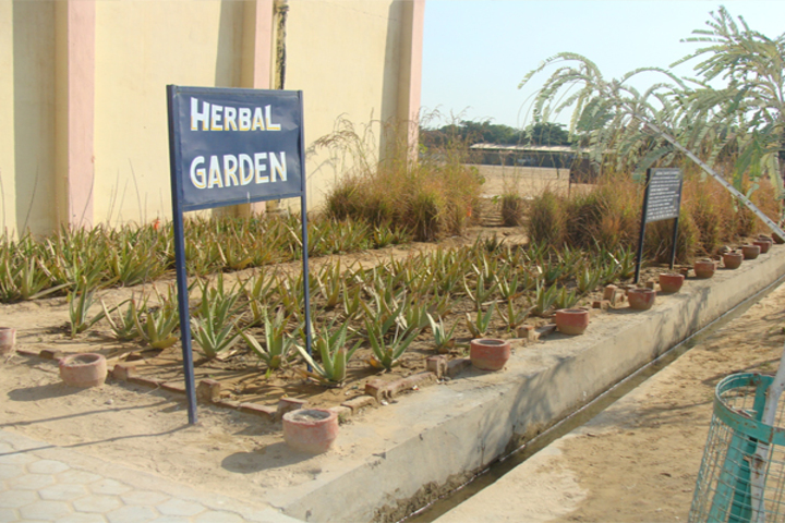 Army Public School - Garden