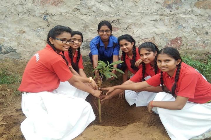Hans International Senior Secondary School- Tree Plantation