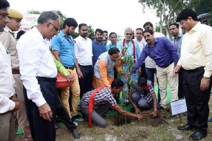 Kendriya Vidyalaya-Tree Plantation