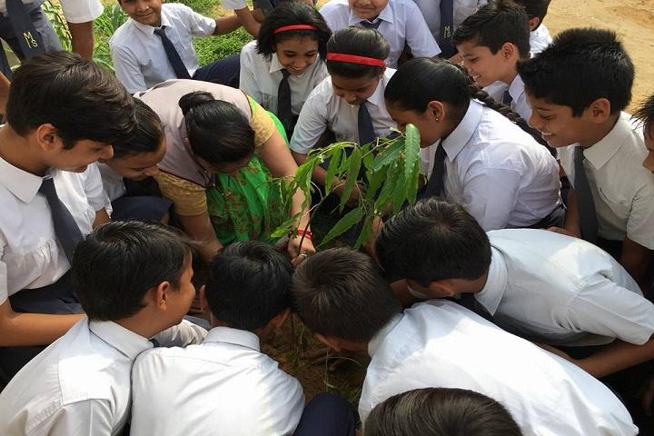 Modern School-Plantations