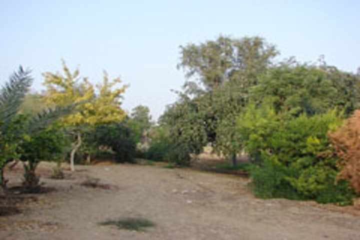 Sesomu School-School Orchard