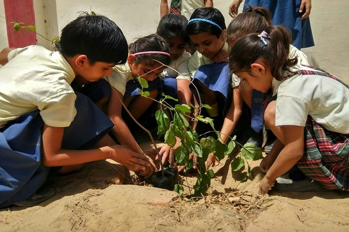 Shiksha High School-Others plantation