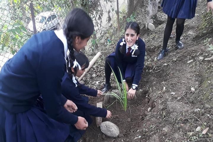 Government Senior Secondary School-Environment Day