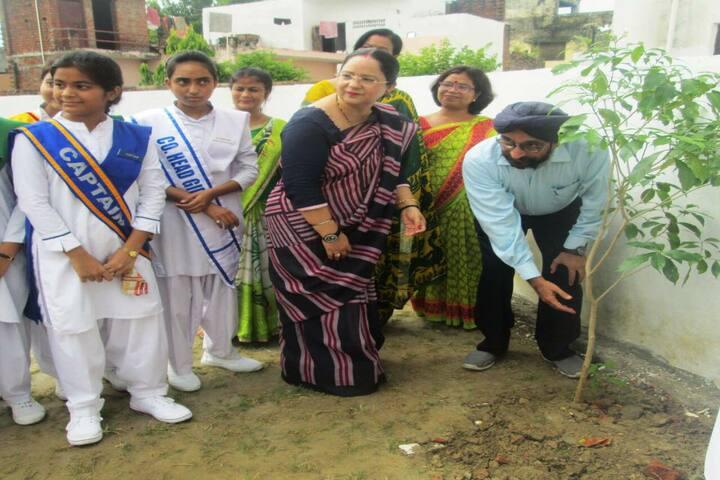 Avadh Collegiate-Tree Plant