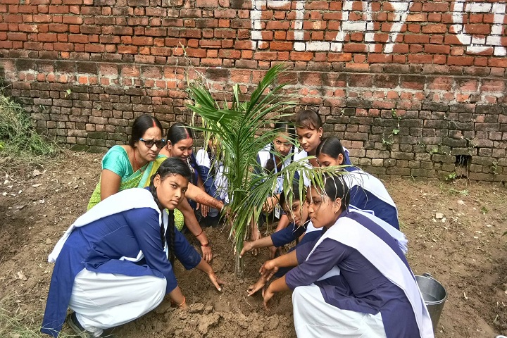 B P M GYAN JYOTI SCHOOL-Tree Plantation