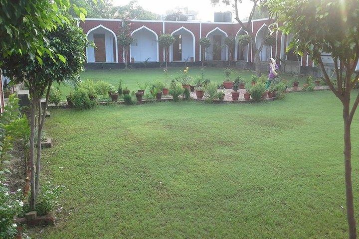 Black Dale Public School-School Garden
