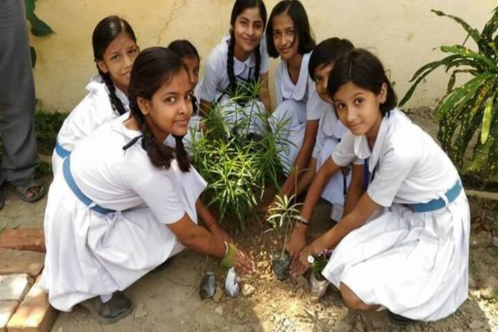 CENTRAL HINDU GIRLS SR SEC SCHOOL-tree plantation