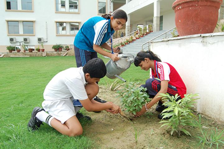 Delhi Public School-Plantation
