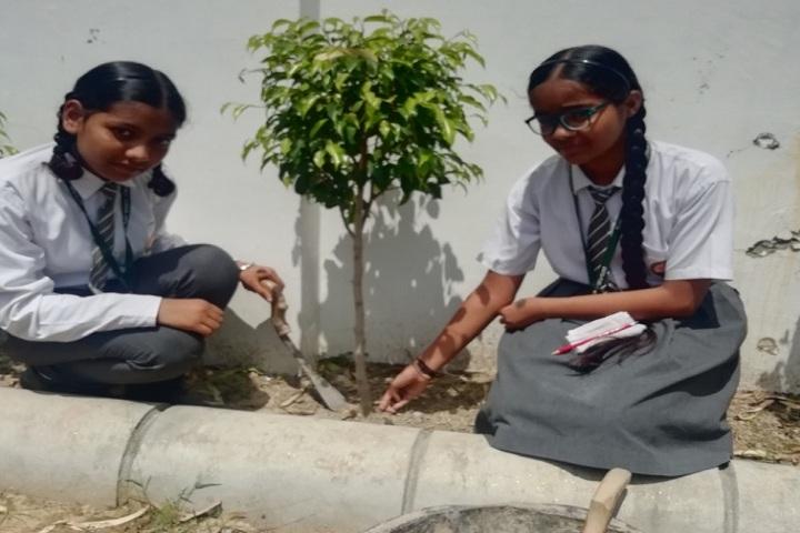Divya Public School-Others plantation