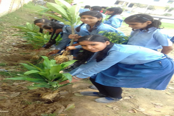 Genius Public School-Tree Pantation
