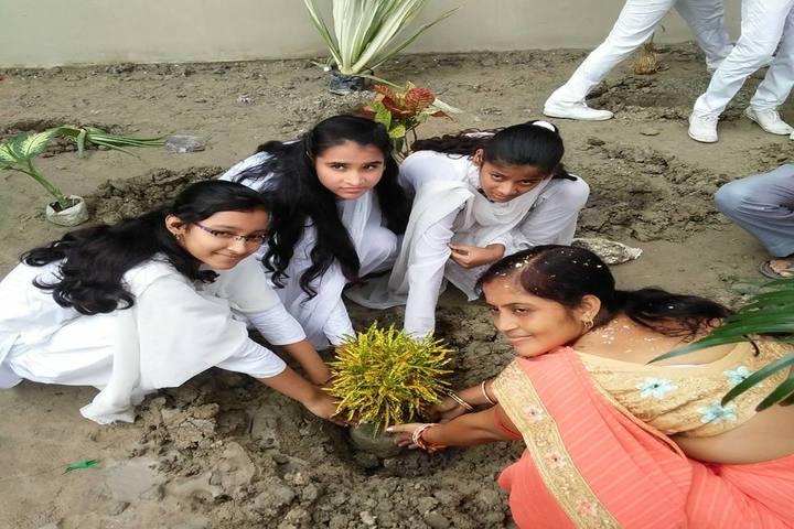 Sunshine School-Tree Plantation