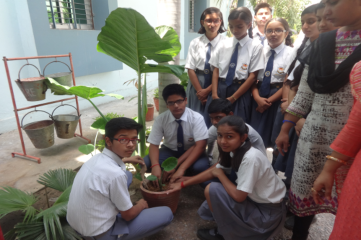 Oxford Green Public School - Tree planting