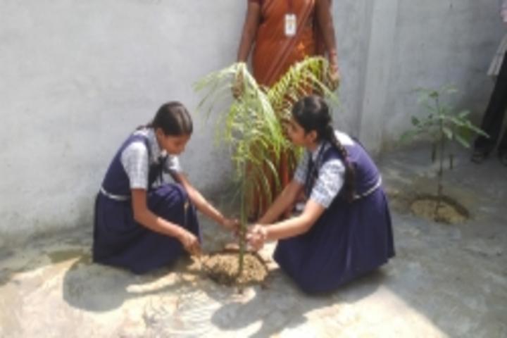 Parvati Public School-Tree Plantation