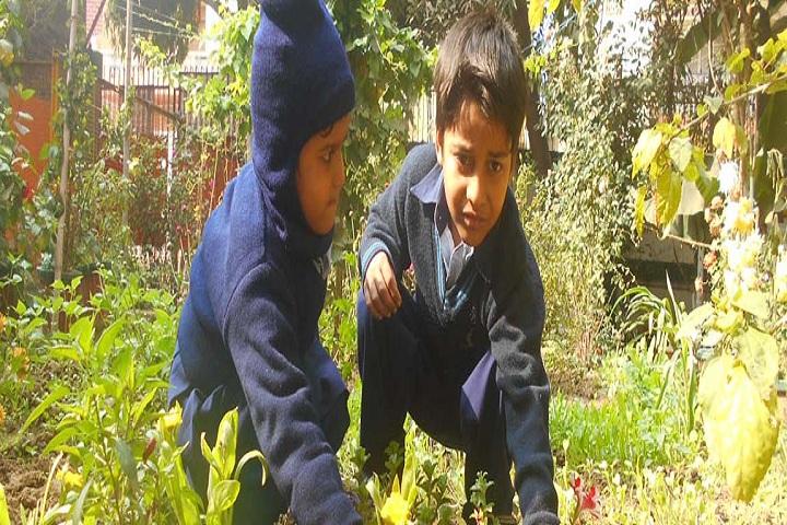 Vikas International Public SchoolPlant A Tree