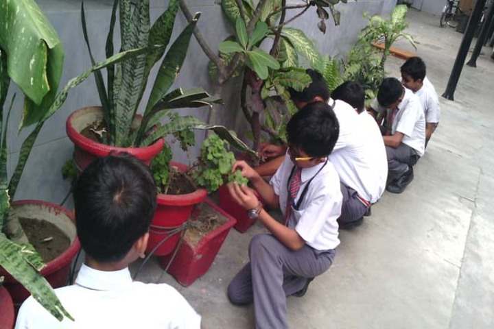 Rani Laxmi Bai Memorial School-Environment Day