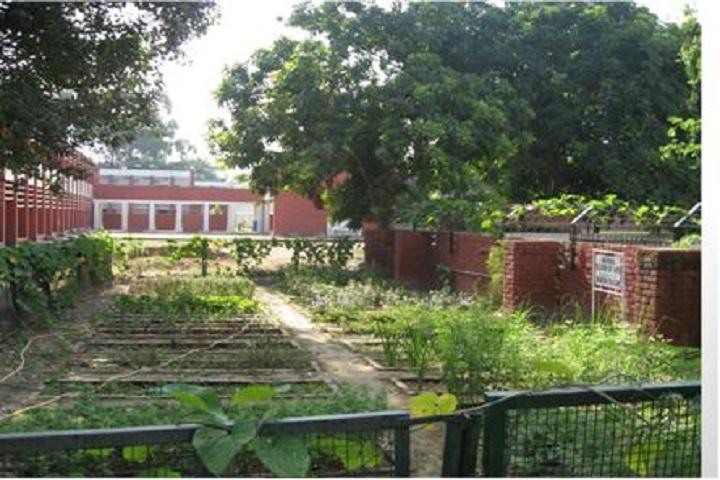 Government Model Senior Secondary School-Herbal Nursery Plant