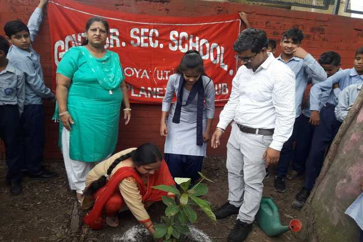 Government Secondary High School-Tree Plantation