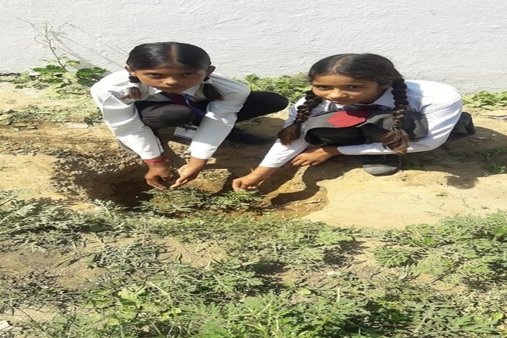 Ambition Public School-Tree Plantation