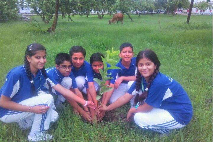 Sai Public School-Plantation