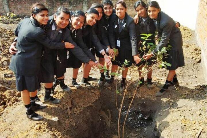 Adarsh Vidyalalya English Medium Higher Secondary School-Tree Plant