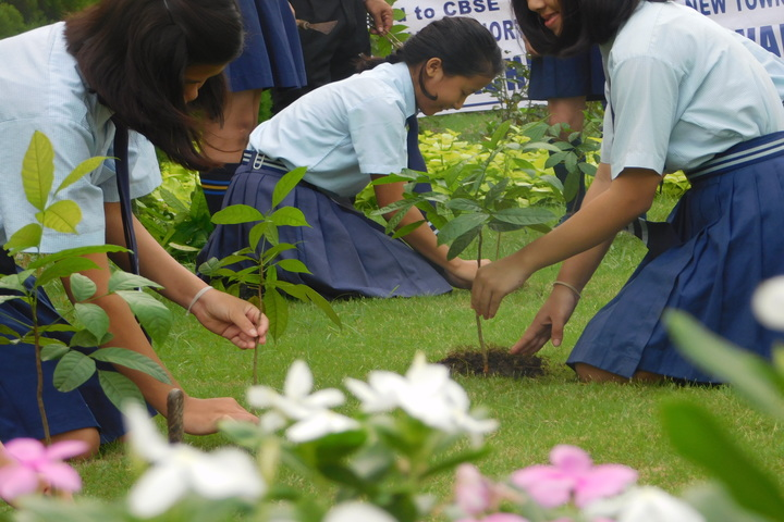 Bodhicariya Senior Secondary School-Plant A Tree