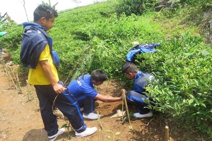Godwin Modern School-Tree Plantation