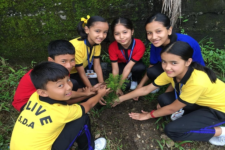 Spring Dales Academy-Plantation