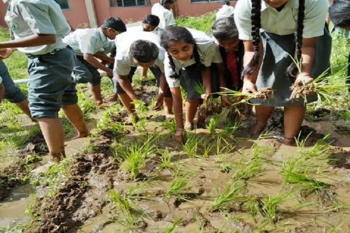 Gnanodaya Public School-Rice Cultivation Activities