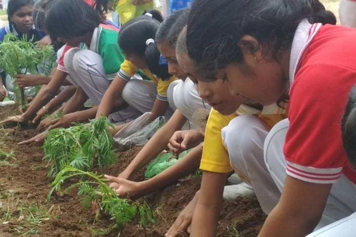 Dev Public School-Plant Distribution