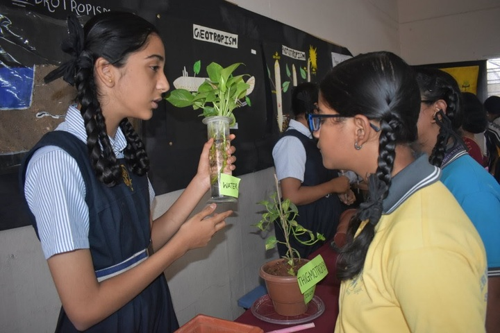 Sherwood Public School-Environment day