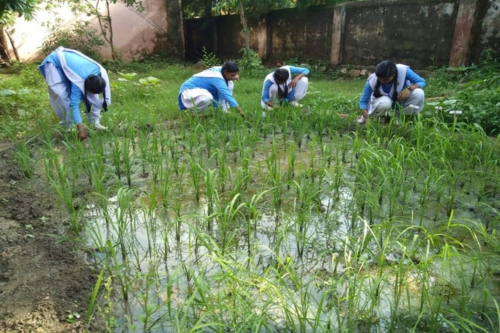 Govt Girls Higher Sec School Raipur-World Environment Day
