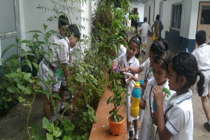 St Augustines Day School-Tree Plant