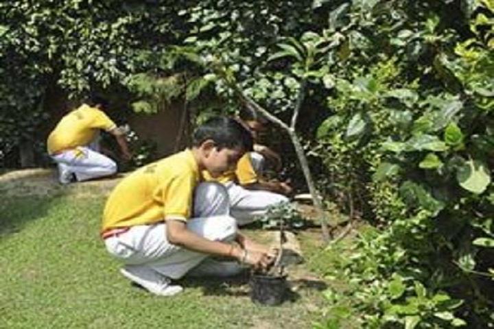 Cambridge Public School-Planting  Tree