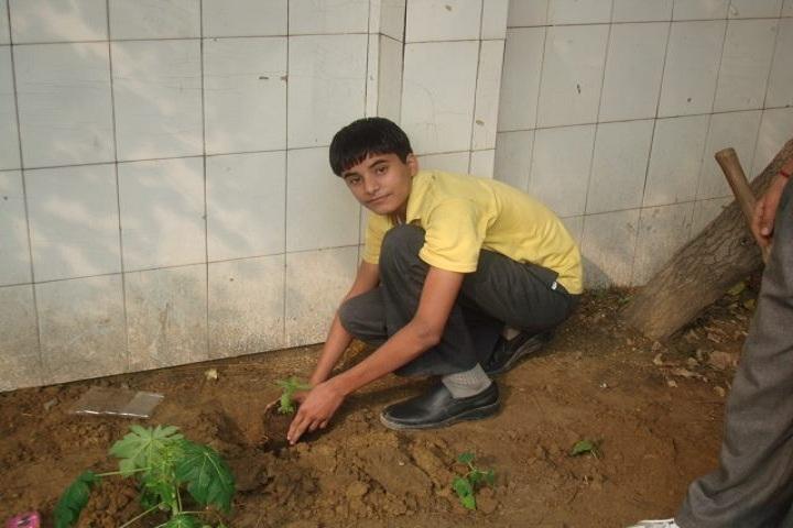 D H M Public School- Tree Plantation 1