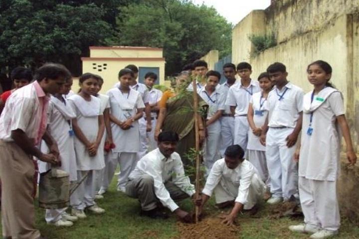 D T E A Senior Secondary School-Tree Plantation